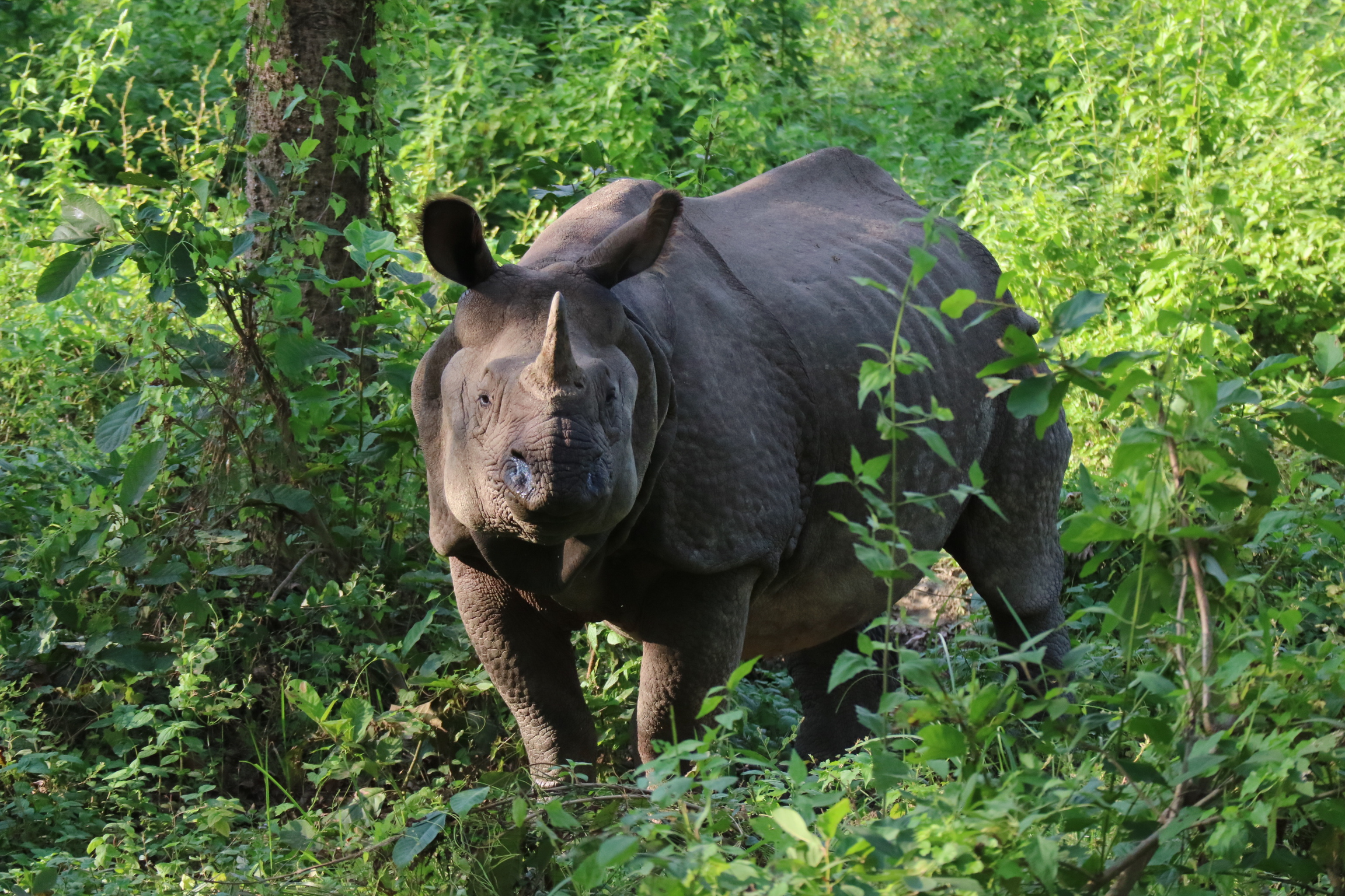 ネパール旅行記 1 「世界遺産」チトワン国立公園